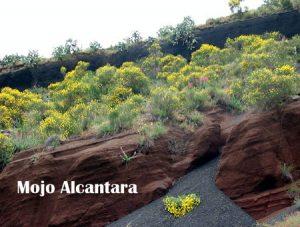 Mojo-Alcantara1-300x227